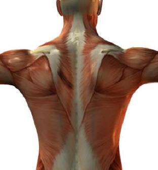 spända muskler i ryggen