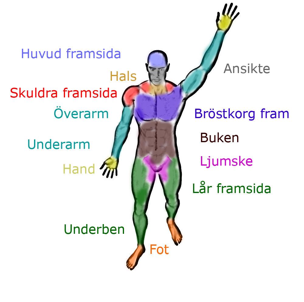 anatomiska regioner framsida