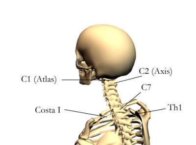 Anatomin bakom naclspärr