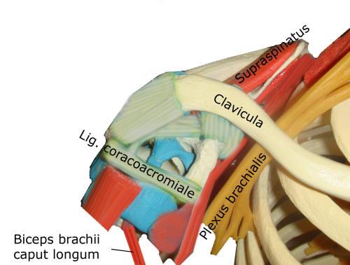 Impingement är ortopediskt tillstånd