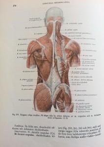 Anatomibild den klassiska boken av Ture Petrén